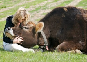 His name is Lionel and she rescued him from a slaughterhouse when he was a calf. True story.