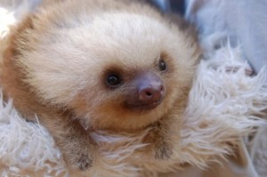 Whoa what how did this get in here??