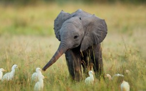 Elephants are highly emotional creatures, and are one of the only mammals besides us who mourn their dead.